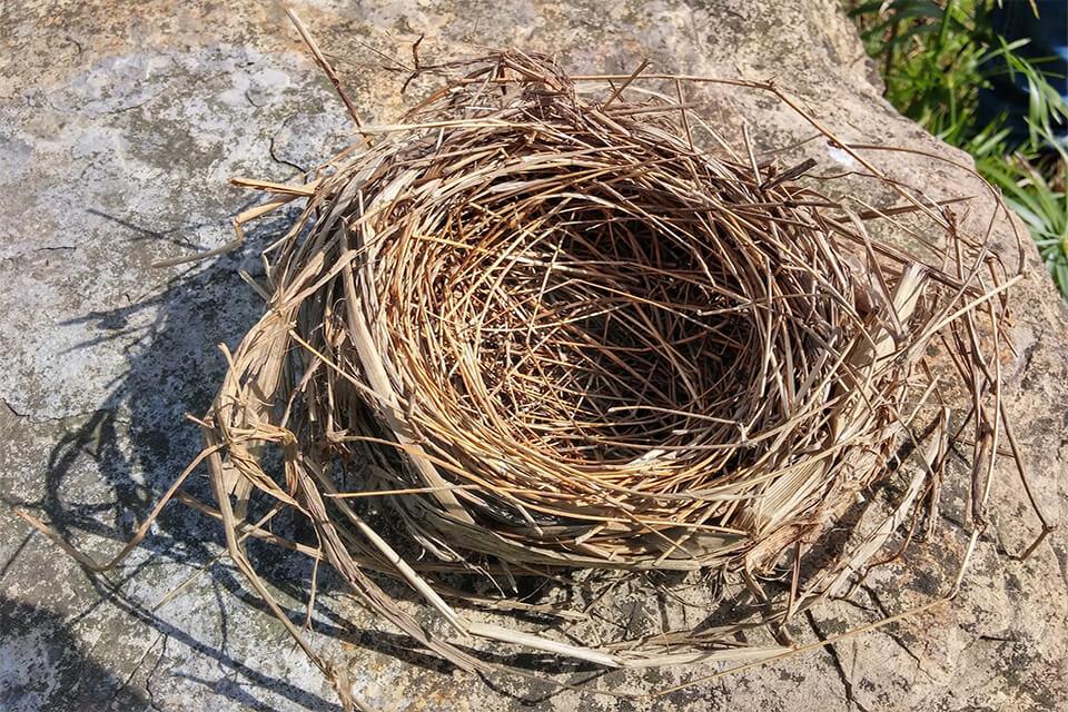nido aislante