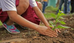 Factorenergia estarà a la Plantada d'arbres a Manresa que organitza Planta'm