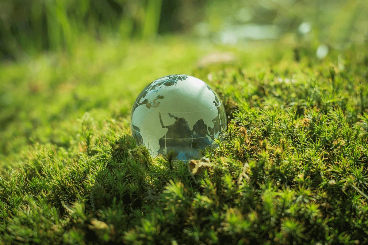 Celebra el Dia Mundial del Medi Ambient